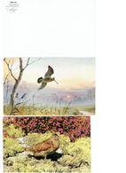 Lot 2 Cpm - Oiseau Bécasse - - Uccelli