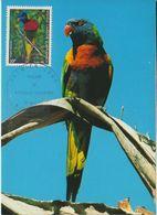 Nouvelle Calédonie; New Caledonia.. 1982 Loriquet à Tête Bleue Coconut Lorikeet    Carte-maximum. - Perroquets & Tropicaux
