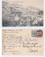 Pasubio - Il Dente Del Pasubio, Stelle Alpine, Dedica Da Zona Di Guerra, Schio, 1919 - Italie