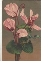 Cartolina - Postcard /  Non Viaggiata - Unsent / Orchidea. - Bloemen
