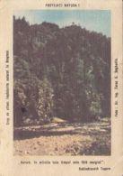 87802- ENVIRONMENT PROTECTION, NATURE, POCKET CALENDAR, 1989, ROMANIA - Small : 1981-90