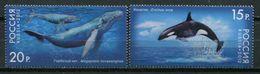Russia 2012 Rusia / Whales Sea Mammals MNH Ballenas Mamíferos Säugetiere / Cu7723  23-19 - Ballenas