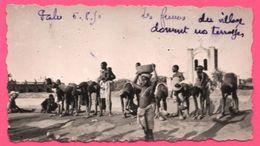 Photo Afrique - Pabré - Les Femmes Seins Nus Du Village Dament Nos Terrasses - Animée - VELOX - 1950 - Afrika