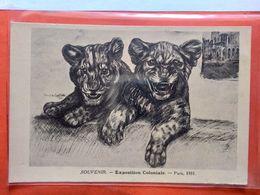 CPA.Exposition Coloniale De Paris 1931. Lions. Signé Francine Cartier.  (D1.261) - Exhibitions