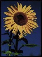 Sonnenblume  -  DJH Deutsche Jugendherberge Ca. 1983   (13012) - Bloemen