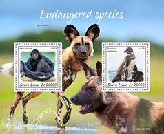 Sierra Leone 2020 Fauna ,Endangered Species , Monkey , Penguin  S202003 - Sierra Leone (1961-...)