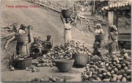 CEYLAN - Cocoa Gathering - Sri Lanka (Ceylon)