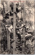 CEYLAN - Tree Climbers Ceylan - Sri Lanka (Ceylon)