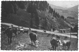 LOT DE 3 CPSM - Pâturage En Montagne - ( Vache ) - Elevage