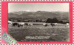Troupeau Au Mont Salève (Hte.Savoie).1380m.Chaine Des Alpes, Le Mont. Blanc (retco Versos) - France