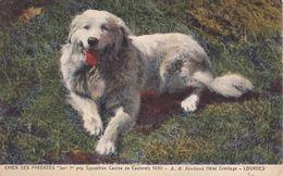 206 Chien Des Pyrénées LL Chien Des Pyrénées  Jer 1er Prix Exposition Canine De Cauterets 1920 Hôtel Hermitage Lourdes - Chiens