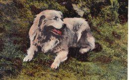 Chien Des Pyrénées  Jer 1er Prix Exposition Canine De Cauterets 1920 Hôtel Hermitage Lourdes - Chiens