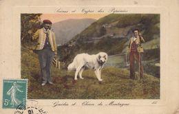 Scènes Et Types Des Pyrénées Guides Et Chiens De Montagne - Chiens