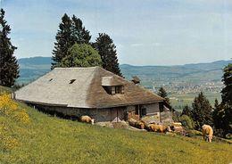 Pâturage En Gruyère Et Ville De Bulle - Vaches  (10 X 15 Cm) - FR Fribourg