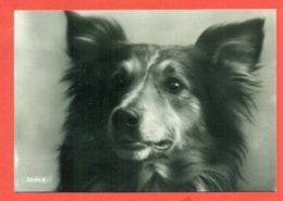 CANI - - Chiens