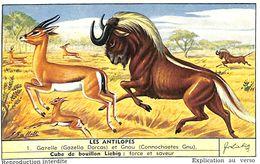 6 Chromos - Liebig - Les Antilopes - S 1559 - Liebig