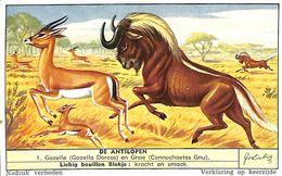 6 Chromos - Liebig - De Antilopen - S 1559 - Liebig