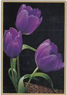 87918- TULIPS, FLOWERS, POCKET CALENDAR, 2012, ROMANIA - Small : 2001-...