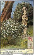 6 Chromos - Liebig - Abrisseaux Décoratifs Des Parcs Et Jardins - Liebig