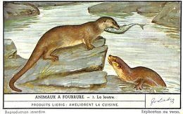 6 Chromos - Liebig - Animaux à Fourrure - S 1486 - Liebig
