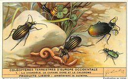 6 Chromos - Liebig - Coléoptères Terrestres D'Europe Occidentale - S 1476 - Liebig