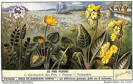 6 Chromos - Liebig - Le Pre Fleuri - S 1544 - Liebig