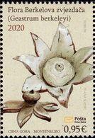 Montenegro - 2020 - Flora - Berkeley's Earthstar - Geastrum Berkeleyi - Mint Stamp - Montenegro