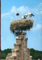 Au Pays Des Cigognes - Dans Le Ciel D'Alsace - Oiseaux