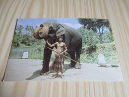 Kandy (Sri Lanka).Greeting Elephant. - Sri Lanka (Ceylon)