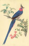 PIE DE COLLIE - Oiseaux