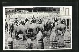 AK Ayuchia, Start For Hunting Elephant - Thailand