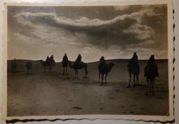 Libya - Libia Italiana (ex Colonie) - Tripoli - Deserto - Non Viaggiata - Fotografica - Cammelli, Cammello, Camels - Libia