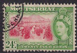 Montserrat 1953 – 62 QE2 24ct Picking Tomatoes Used SG 145 ( E1177 ) - Montserrat