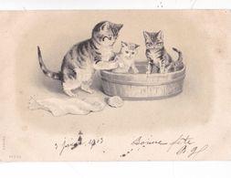 CHATS ,,,,L'HEURE DU BAIN ,,,,1903,,,, SERIE 68     N°  1173 - Cats