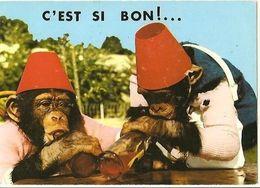 CPM - Jardin ZOOLOGIQUE Du Gué Gallet - SIGNY-le-CHATEL - COUPLE De CHIMPANZES - Edition Combier - Monkeys