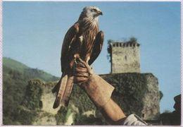 CPM - BEAUCENS - DONJON DES AIGLES - Démonstration De Vol En Liberté - Edition Du Site - Birds
