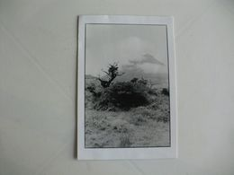 Postcard Postal Portugal Açores Ilha Do Pico Lages Do Pico - Açores