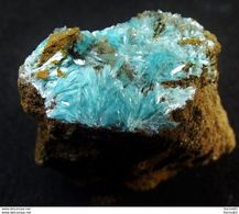 Aurichalcite ( 2 X 2 X 1.1 Cm) - Mina La Ojuela - Mapimi - Mexico - Minerals