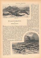 042 Tiergesellschaften Krokodile Fische Artikel Mit 18 Bildern Von 1888 !! - Animals