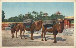 CPA Asie Chine Coal Hill Camel Train Peking Beijing Pékin Hartung's Photo Shop - Cina