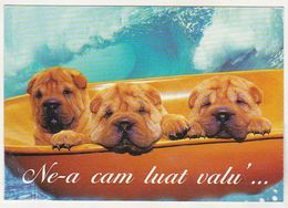 Romania Used Postcard - Dogs - Chiens
