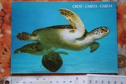 Crete- Careta - Tortue - Nice Turtle  - Old Postcard - Grecia