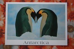 Antarctica  -  Penguin - Old Postcard - Postcards