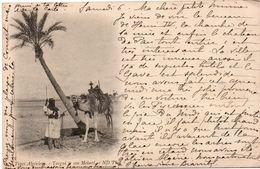 Targui Et Son Mehari 1901 - Types Algériens - ND - Hommes