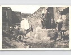 SIRACUSA-MESSINA (G) Famiglia Campestre Vera Foto Con Animali Viaggiato. 1927 - Siracusa