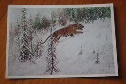 Painter Komarov - Siberian Tiger - OLD  Postcard 1975 - Rare! - Tigres