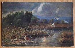 Bécasses Ou Bécassines Au Bord D'un Marais - Oiseaux - Kunstverlag Rehn & Linzen, Cassel - (n°17832) - Vögel
