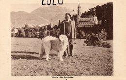 DEPT 65 : Carte Photo Chien Des Pyrénées , Chenil Du Pic Du Jer Abadie Toulet Au Lac De Lourdes ( Au Fond La Basilique ) - Tarbes