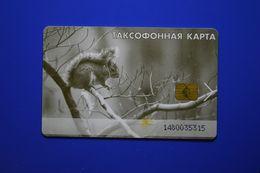 Kemerovo Region. Squirrel. - Rusland