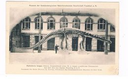 D-11138   FRANKFURT Am MAIN : Museum Der S.N.G With Diplodocus Longus ( Dinosaur, Dinosaurier) - Frankfurt A. Main